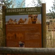 Custom Outdoor Zoo Signs