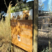 Zoo Camel Information Graphic Sign