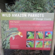Zoo Parrot Outdoor Laminated Sign