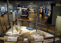 Custom Museum Exhibit Signage