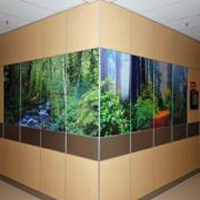 Indoor Custom Rainforest Graphic Sign