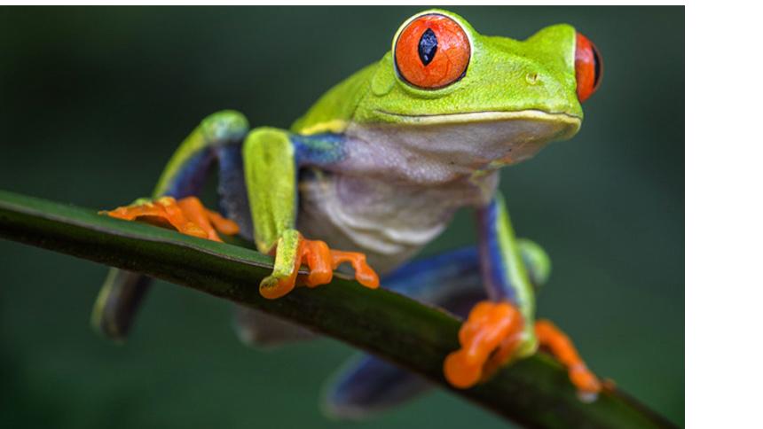 iZone Frog Graphic