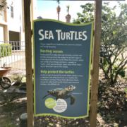 Florida Beach Resort shaped intepretive panel in kiosk featuring sea turtles