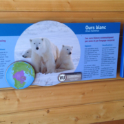 outdoor zoo exhibit interpretive panel featuring polar bears