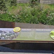 outdoor zoo exhibit interpretive panel featuring Tundra plants and attached sculpture