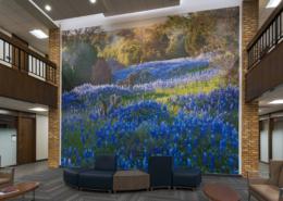 "Killeen Metroplex Med. Plaza wall mural of ""Bluebonnet"" wildflowers"