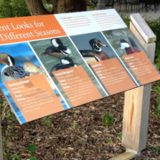 animal identity sign featuring the different feather patterns of Ducks