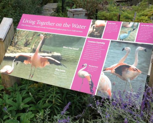 animal identity sign featuring Flamingos