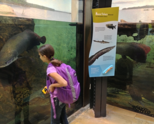 girl with backpack viewing aquarium next to large exhibit panel