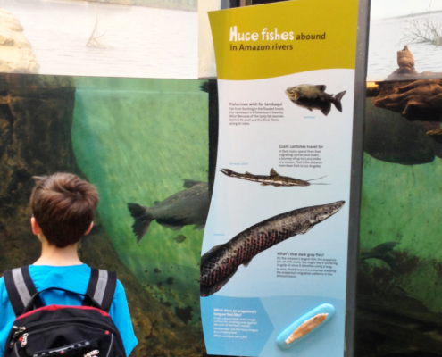 Boy with pack viewing fish in aquarium with large colorful interpretive sign