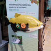 Large exhibit panel with life size fish replica attached